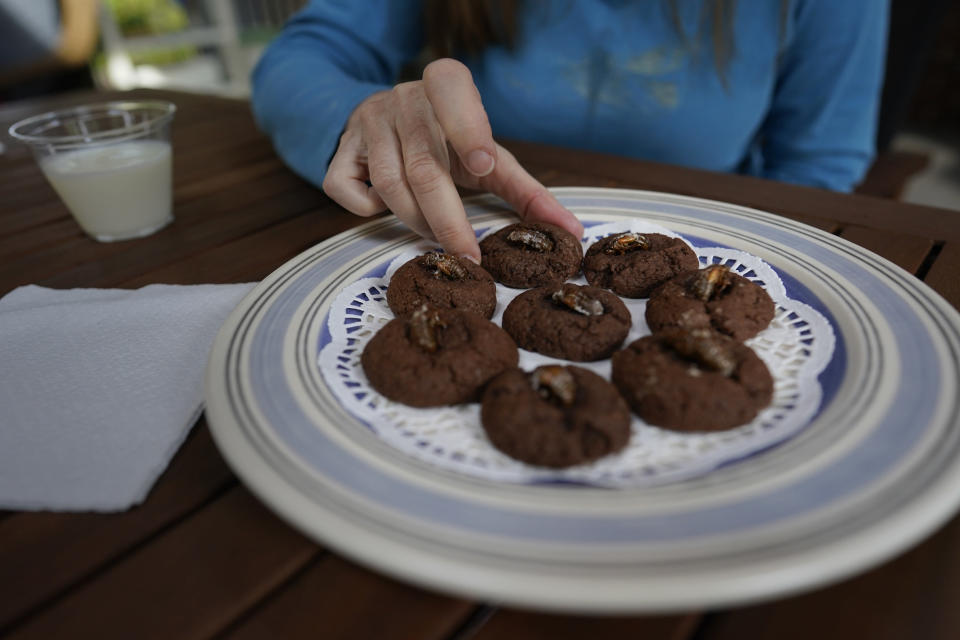 University of Maryland entomologist Paula Shrewsbury, reaches for a cookie topped with a cicada nymph, Monday, May 17, 2021, in Columbia, Md. (AP Photo/Carolyn Kaster)