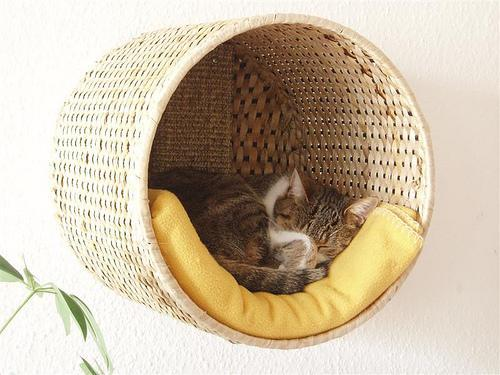 cat resting in suspended whicker basket