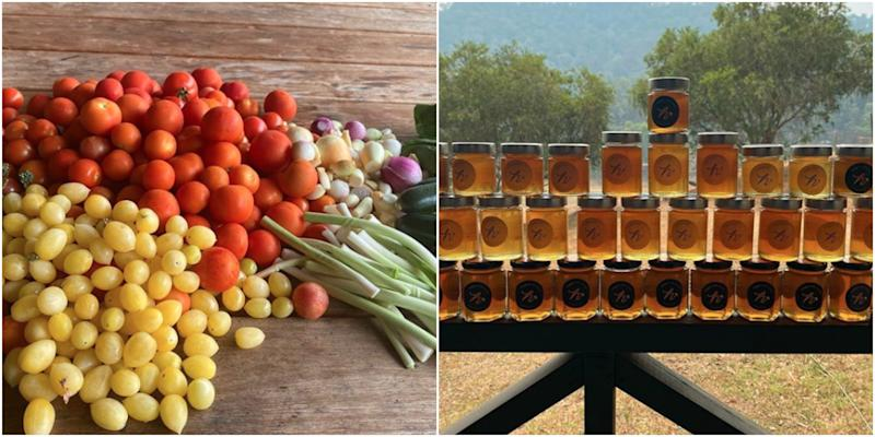 Table of vegetables and honey in a pot in Johanna Griggs' garden