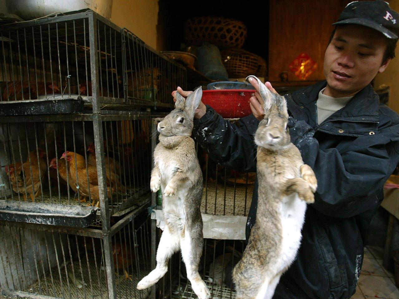 Wuhan has banned eating wild animals and nearby provinces are offering farmers cash to stop breeding exotic livestock