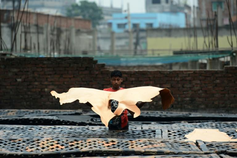 A Bangladeshi worker dries pieces of processed leather at a tannery in Dhaka