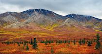 """<p>The colorful cliffs of the Polychrome Pass and caribou grazing on fields of green and gold grasses make for an idyllic scene at Alaska's Denali National Park. While its known enchanting glaciers and winding rivers, Denali in the fall time is a scene not to be missed. The park stretches across 6 million acres with swathes of burnt orange trees popping against snowy mountains. </p><p>Around 85 miles into the park, Wonder Lake offers impressive views of the Alaska Range and Denali's north flank. </p><p><em>Where to Stay: <a href=""""https://sheldonchalet.com/"""" rel=""""nofollow noopener"""" target=""""_blank"""" data-ylk=""""slk:Sheldon Chalet"""" class=""""link rapid-noclick-resp"""">Sheldon Chalet</a> in Matanuska-Susitna, Alaska</em></p>"""