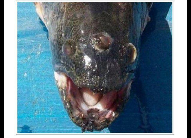 Fishermen landed a three-eyed fish in Argentina near a nuclear reactor in October 2011.