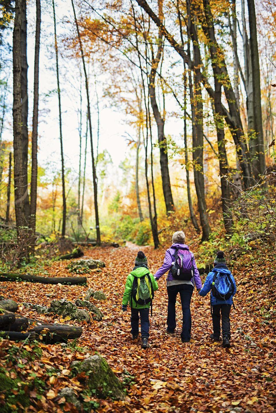 "<p>Pack a few bags, bundle up, and make a day trip to a local forest this fall. Little ones will have a blast exploring new territory, especially if there's a spectacular aerial view waiting for them at the end. </p><p><a class=""link rapid-noclick-resp"" href=""https://www.amazon.com/Columbia-Womens-Redmond-Waterproof-Regular/dp/B01015RJTI/?tag=syn-yahoo-20&ascsubtag=%5Bartid%7C10050.g.2633%5Bsrc%7Cyahoo-us"" rel=""nofollow noopener"" target=""_blank"" data-ylk=""slk:SHOP HIKING BOOTS"">SHOP HIKING BOOTS</a></p>"