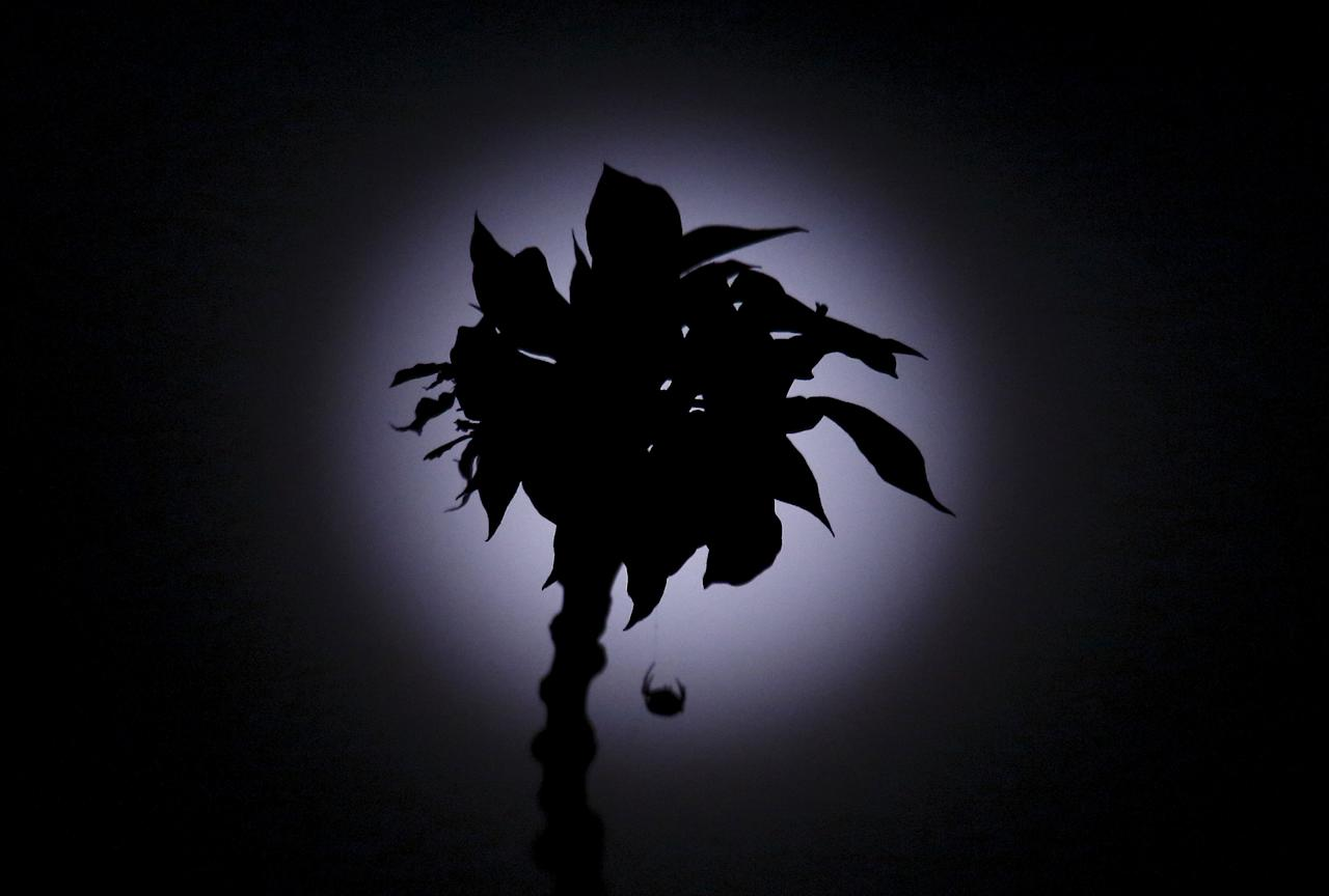 A spider hanging by its web on a flower is silhouetted against the full moon after a total lunar eclipse in Kathmandu April 4, 2015. Due to rainfall the total lunar eclipse was not visible from Kathmandu. REUTERS/Navesh Chitrakar      TPX IMAGES OF THE DAY