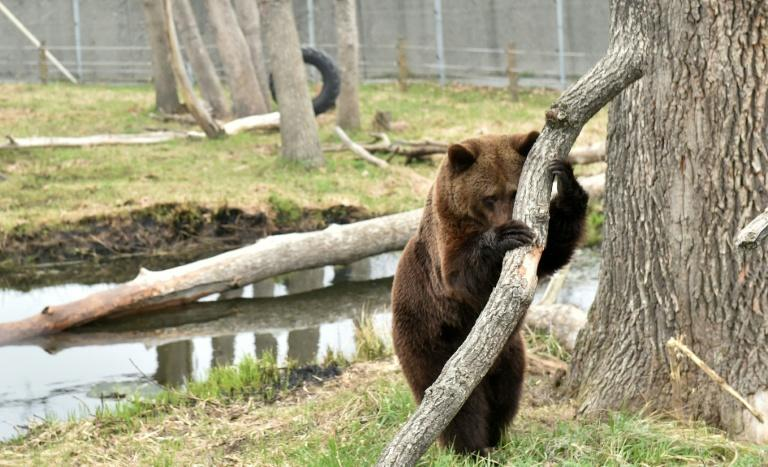 Tortured for years by humans these mighty animals have been given sanctuary near the city of Zhytomyr, in northwest Ukraine