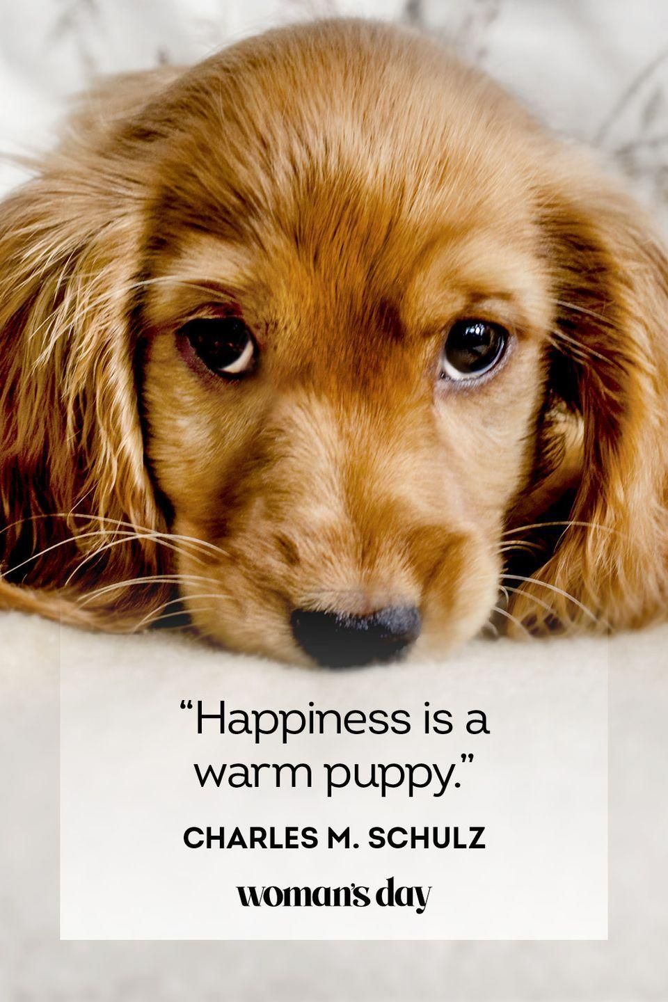 """<p>""""Happiness is a warm puppy.""""</p>"""