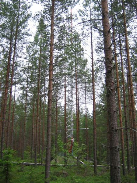 The Hyytiälä forest in Finland, where scientists watched the birth of aerosol particles.