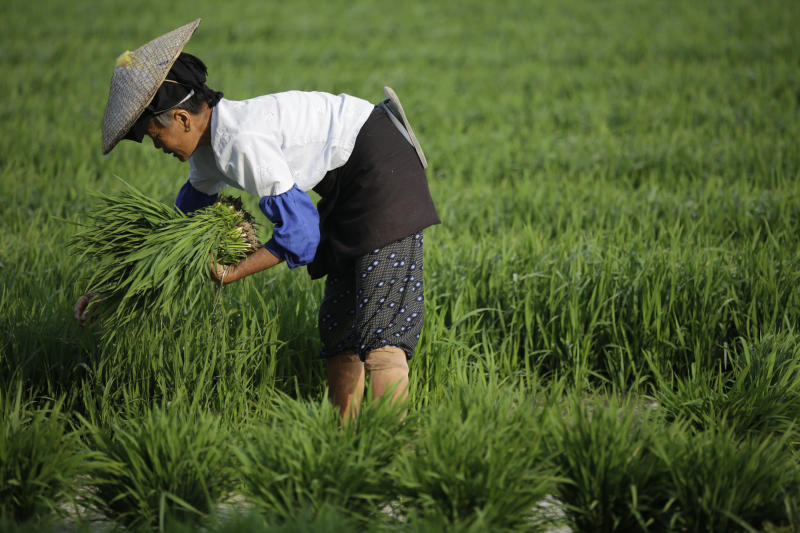 In this May 26, 2012 photo, a local woman plants rice in Yingjiang, near Myanmar border, Yunnan Province, China. Many still expect that the lifting of U.S. and European Union economic sanctions against Myanmar will boost trade from China's industrial regions through Ruili and other border areas in Yunnan, a mostly mountainous province that has close ties with all its Southeast Asian neighbors. (AP Photo/Eugene Hoshiko)
