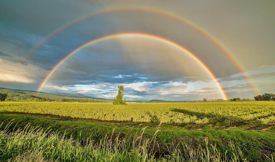 "<p> You know what they say: if you can find the end of a rainbow, there lies a pot of gold. </p> <p> <a href=""http://media1.popsugar-assets.com/files/2021/02/12/040/n/1922507/f69545657a0c228e_pexels-james-wheeler-1542495/i/st-patricks-day-zoom-backgrounds.jpg"" class=""link rapid-noclick-resp"" rel=""nofollow noopener"" target=""_blank"" data-ylk=""slk:Download this Zoom background image here."">Download this Zoom background image here.</a> </p>"