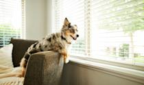 """<p>You may have to revisit some training as your dog goes through this re-acclimation period. """"Be patient with your pet, he misses you!"""" Dr. Shelley Zacharias, DVM, VMP, BCMAS, tells Woman's Day. """"He may be more vocal, destructive or act out during this time but stick to your normal routine you had with him prior to the COVID quarantine (assuming it worked) and he will re-acclimate much quicker than if you try to start a new routine with him. If your previous routine wasn't working with your dog, then this is a perfect opportunity to start a new routine for your pet.""""<br></p>"""