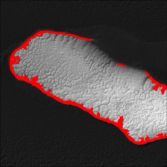 Potential den sites on Howe Island highlighted in red were identified by lidar.