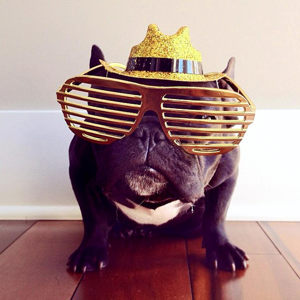 PIC BY SONYA YU / CATERS NEWS - (PICTURED: Trotter wearing some trendy glasses) - An adorable little French Bulldog has been playing dress-up and has impressively gathered a following of 30,000 on Instagram. The photogenic hipster, called Trotter, wears a range of outfits from a beret, moustache, top hat and pipe to high heels. Owner and Trotters photographer Sonya Yu said her little pup is simply a natural in front of the camera. SEE CATERS COPY