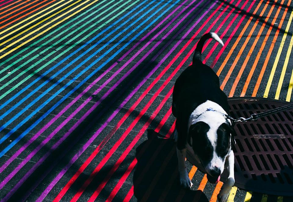 """<span class=""""caption"""">Don't worry that your dog's world is visually drab.</span> <span class=""""attribution""""><a class=""""link rapid-noclick-resp"""" href=""""https://www.gettyimages.com/detail/photo/high-angle-view-of-dog-walking-on-colorful-striped-royalty-free-image/677142241"""" rel=""""nofollow noopener"""" target=""""_blank"""" data-ylk=""""slk:Kevin Short/EyeEm via Getty Images"""">Kevin Short/EyeEm via Getty Images</a></span>"""