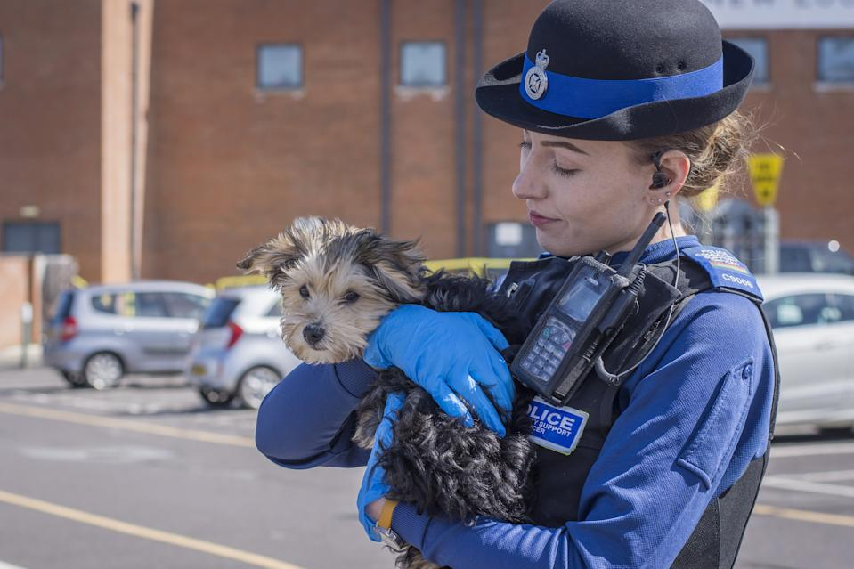 A police community support officer (PCSO) with the dog which was left in a vehicle in Swindon, Wiltshire, on Monday (SWNS)