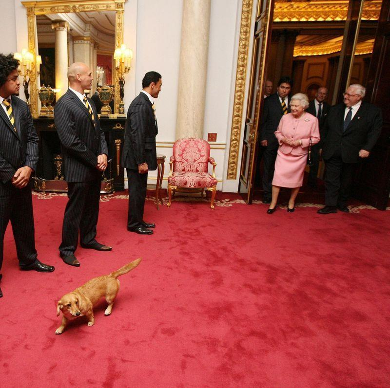 """<p>The BBC reported that the Queen still has a couple of Dorgis — dachshund and corgi mixes — left. She bred the dogs for a while, beginning with her sister's dachshund ,Pipkin. Now, only Candy and Vulcan are alive. So at least she still has the comfort of a pet in her old age, even if she's not breeding any new ones.</p><p><strong>__________________________________________________________ </strong></p><p><em><a href=""""https://subscribe.hearstmags.com/subscribe/womansday/253396?source=wdy_edit_article"""" rel=""""nofollow noopener"""" target=""""_blank"""" data-ylk=""""slk:Subscribe to Woman's Day"""" class=""""link rapid-noclick-resp"""">Subscribe to Woman's Day</a> today and get <strong>73% off your first 12 issues</strong>. And while you're at it, <a href=""""https://subscribe.hearstmags.com/circulation/shared/email/newsletters/signup/wdy-su01.html"""" rel=""""nofollow noopener"""" target=""""_blank"""" data-ylk=""""slk:sign up for our FREE newsletter"""" class=""""link rapid-noclick-resp"""">sign up for our FREE newsletter</a> for even more of the Woman's Day content you want.</em></p>"""