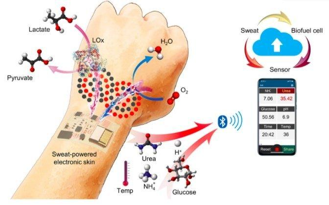 Informational graphic explains how sweat power's Caltech's new wearable e-skin.