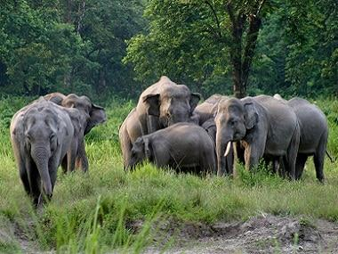 North East students' unions, civil society groups seek withdrawal of 'extractive projects' proposed in elephant reserve, national park