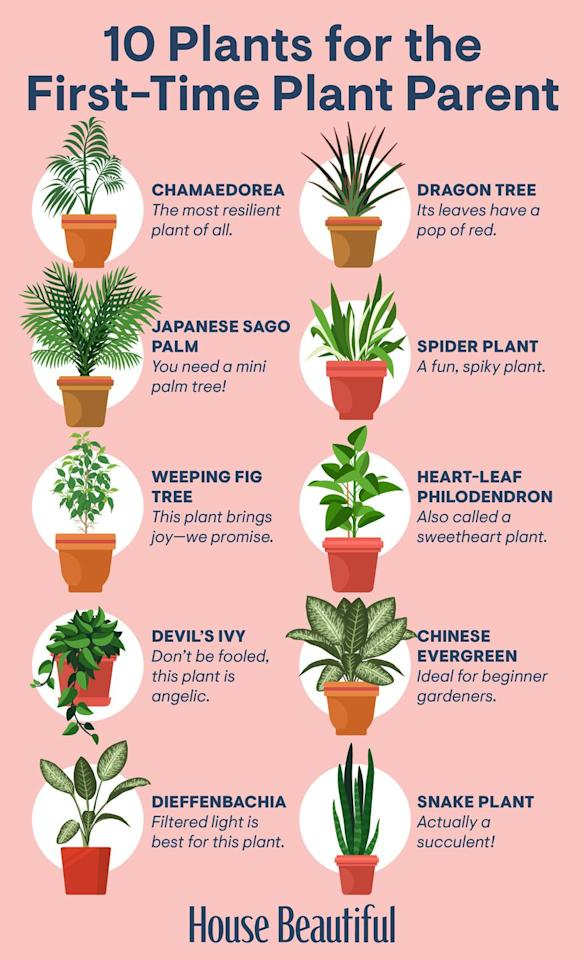 <p>Before scrolling any further, save this reference guide so you have it on hand the next time you're plant shopping. </p>