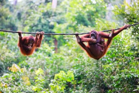 Explore Malaysian Borneo - Credit: GETTY
