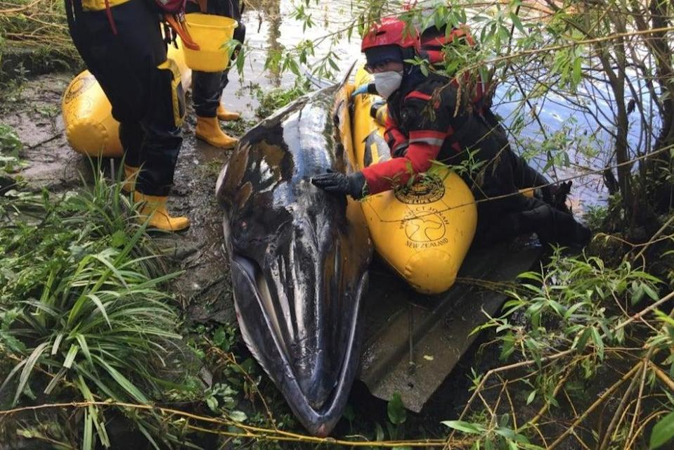 <p>The whale was put down by a vet</p> (British Divers Marine Life Rescue)
