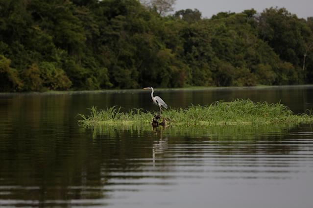 <p>A heron is seen in the Mamiraua Sustainable Development Reserve in Uarini, Amazonas state, Brazil, March 7, 2018. (Photo: Bruno Kelly/Reuters) </p>