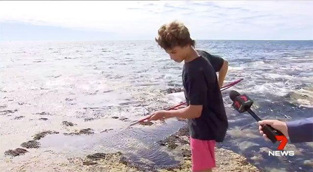 The quick-thinking boy was able to poke the shark in the nose with his spear, which was enough to move the predator along. Source: 7 News