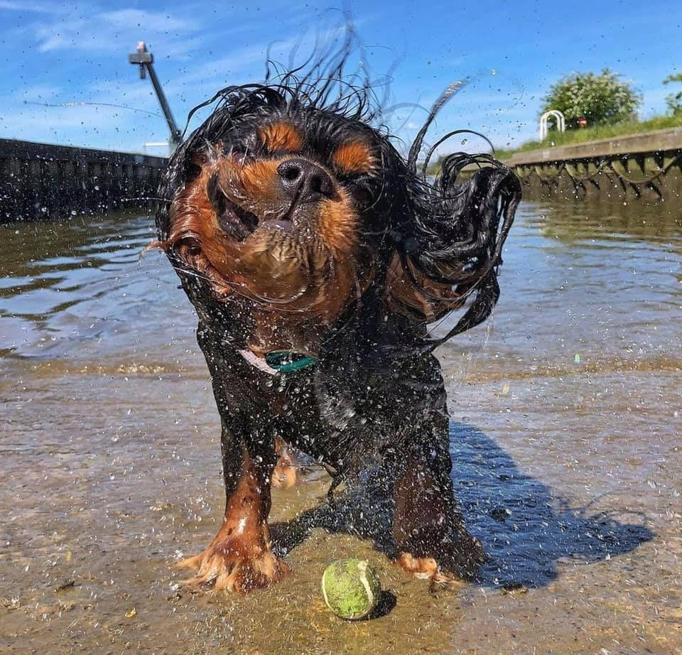"""<p>Taking the top spot is seven-year-old Arthur from Suffolk, who wowed judges with his adorable post-swim look. </p><p>Kelly, Arthur's owner said: """"We couldn't be happier that Arthur has won the UK's cutest wet dog competition! He's been water obsessed since he was six-months-old and has been seeking out any opportunity to get soggy ever since."""" </p>"""