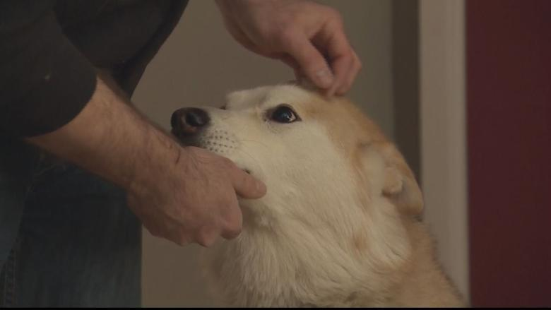 Red Deer man punches cougar at Tim Hortons to save dog
