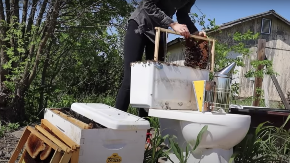 Erika Thompson removes a hive of bees from the back of a toilet outdoors.