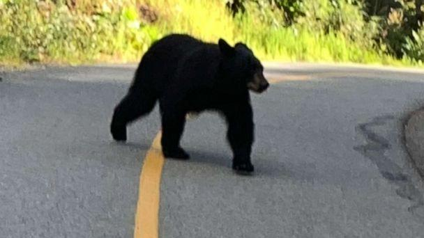 PHOTO: Hiker Sherry Moore from Colorado shared this image of a black bear that she encountered while on a walk in British Columbia, Canada. (Sherry Moore via KMGH)