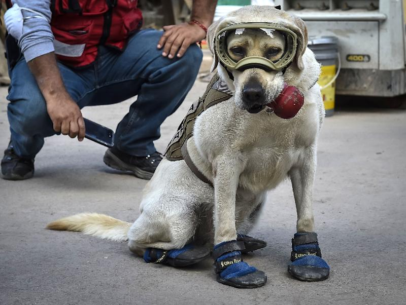 Frida, a rescue dog belonging to the Mexican Navy, with her handler Israel Arauz Salinas, takes a break while participating in the effort to look for people trapped at the Rebsamen school in Mexico City, on September 22, 2017