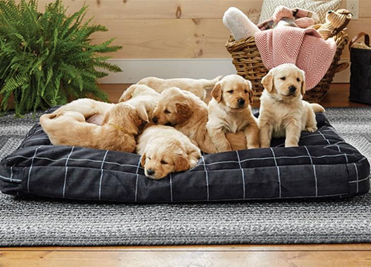 10 Indestructible Dog Beds That Are, Waterproof Outdoor Dog Bed Canada