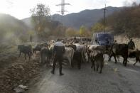 An ethnic Armenian guides at herd of cows in the separatist region of Nagorno-Karabakh, on Friday, Nov. 13, 2020. Under an agreement ending weeks of intense fighting over Nagorno-Karabakh, some Armenian-held territories, such as this area, will pass to Azerbaijan. (AP Photo/Sergei Grits)