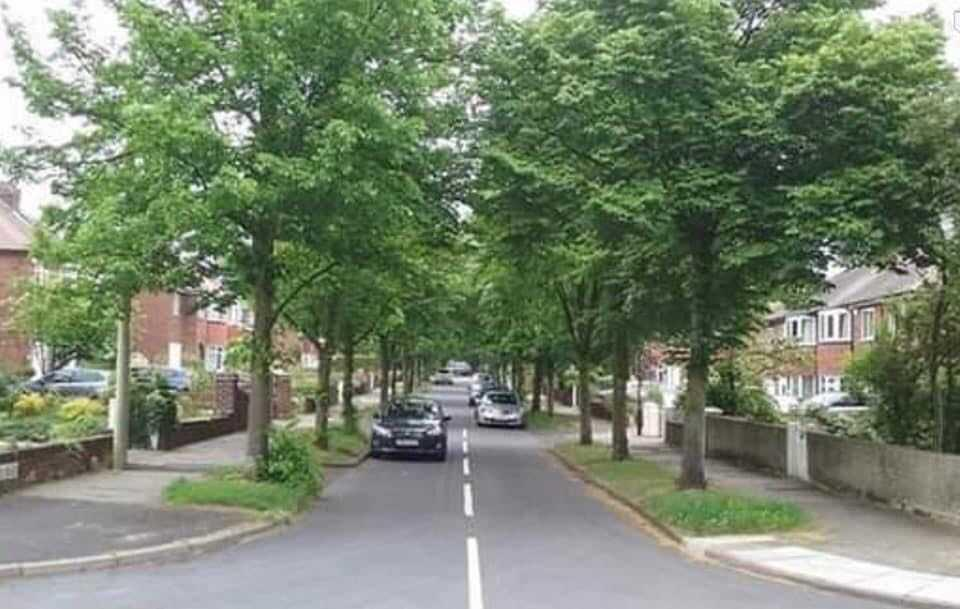 Middlefield Road seen when the trees were in full leaf earlier this yearSera Serfozo