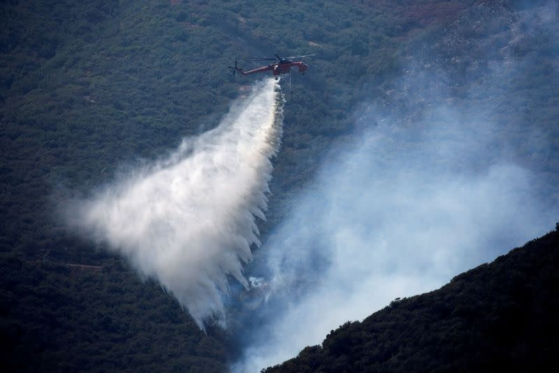California outpaced Trump's Forest Service in wildfire prevention work - data