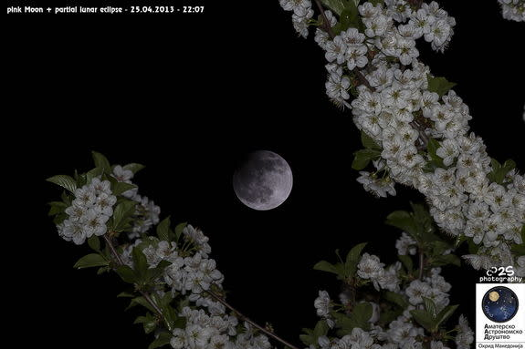 Flowering tree branches delicately frame the partial lunar eclipse of April 25, 2013, in Ohrid, Macedonia. Photo provided by astrophotographer Stojan Stojanovski.