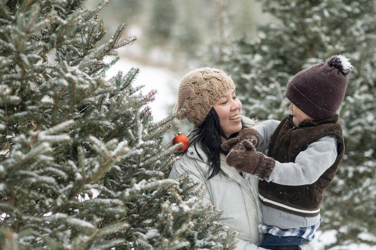 """<p><strong>Anchorage, Alask</strong><strong>a</strong></p><p>Don't let the name fool you: <a href=""""https://minnesotabobs.com/"""" target=""""_blank""""><strong>Minnesota Bob's</strong></a><strong> </strong>is your Alaskan winter wonderland. There are a variety of pre-cut Christmas trees, which are grown in — you guessed it — Minnesota. It's one of the last remaining Christmas tree lots around, so don't miss out on your opportunity to find the best tree for your home.</p>"""