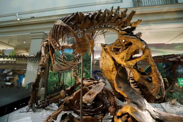 FILE PHOTO: Preview of the Smithsonian's Natural History Museum dinosaur and fossil hall in Washington
