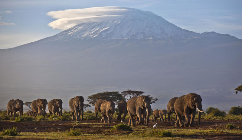 FILE--In this file photo of Monday Dec.17, 2012, a herd of adult and baby elephants walks in the dawn light as the highest mountain in Africa, Tanzania's Mount Kilimanjaro, is seen in the background, in Amboseli National Park, southern Kenya. Representatives of some 180 nations are meeting to agree on protections for vulnerable species, taking up issues such as the trade in ivory and the demand for shark fin soup. The World Wildlife Conference on trade in endangered fauna and flora, known as CITES, which takes place every three years, aims to make sure that global trade in specimens of wild animals and plants doesn't jeopardize their survival. (AP Photo/Ben Curtis, File)