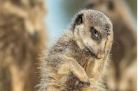 """<p>The animal embodiment of """"SMH."""" </p><p><strong>RELATED: </strong><a href=""""https://www.redbookmag.com/life/mom-kids/news/a50613/korbi-ashton-mom-photos/"""" rel=""""nofollow noopener"""" target=""""_blank"""" data-ylk=""""slk:This Mom's Raw Photos Give An Inside Look At How Crazy Raising Six Kids Can Be"""" class=""""link rapid-noclick-resp""""><strong>This Mom's Raw Photos Give An Inside Look At How Crazy Raising Six Kids Can Be</strong></a></p>"""
