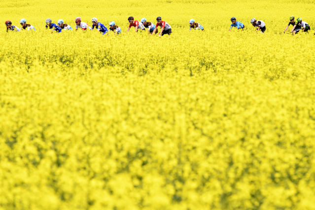 The pack rides between rapeseed fields with bright-yellow flowers during the fifth and last stage, a 181,8 km race between Mont-sur-Rolle and Geneva during the 72th Tour de Romandie UCI ProTour cycling race in Bottens, Switzerland, Sunday, April 29, 2018. (Laurent Gillieron/Keystone via AP)