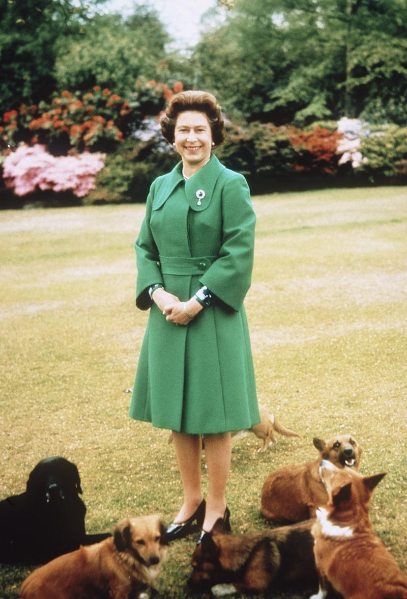 Queen Elizabeth II relaxes at Sandringham with her corgis, 1980.