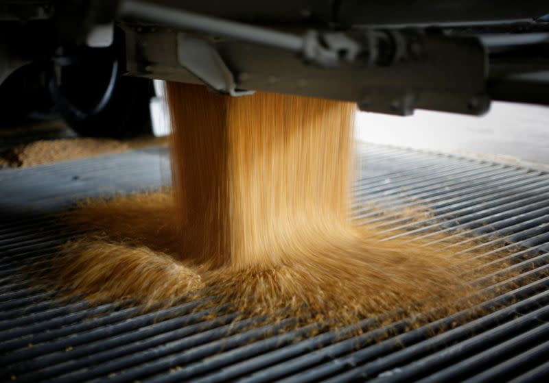 FILE PHOTO: Corn is unloaded into a chute at the Lincolnway Energy plant in Nevada, Iowa