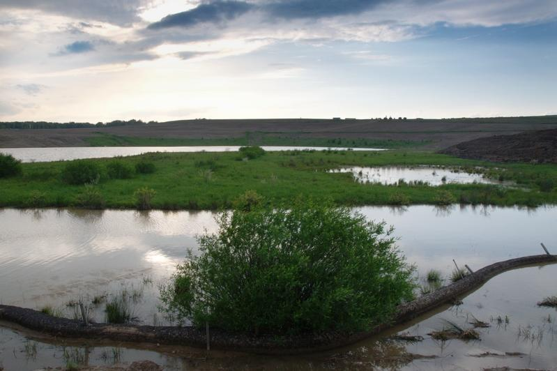 Wetlands, May 2011. (Photo by Richard Snodgrass)