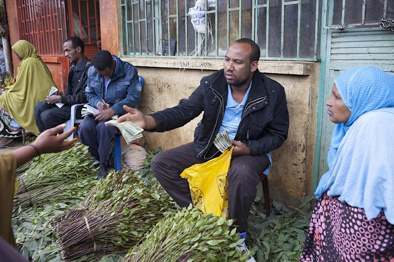 Mustafa, a local khat exporter based in Awaday, Ethiopia, inspects fresh khat, on July 30, 2014 (AFP Photo/Zacharias Abubeker)