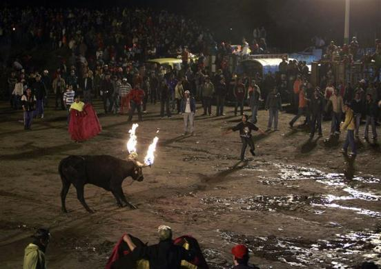 A bull with its horns set on fire prepares to charge at a spectator during the El Novillo de Bombas festival in Mira, some 175 km (109 miles) north of Quito February 6, 2010.