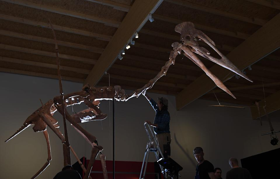 Pterosaur flight puzzle decoded (Getty Images)
