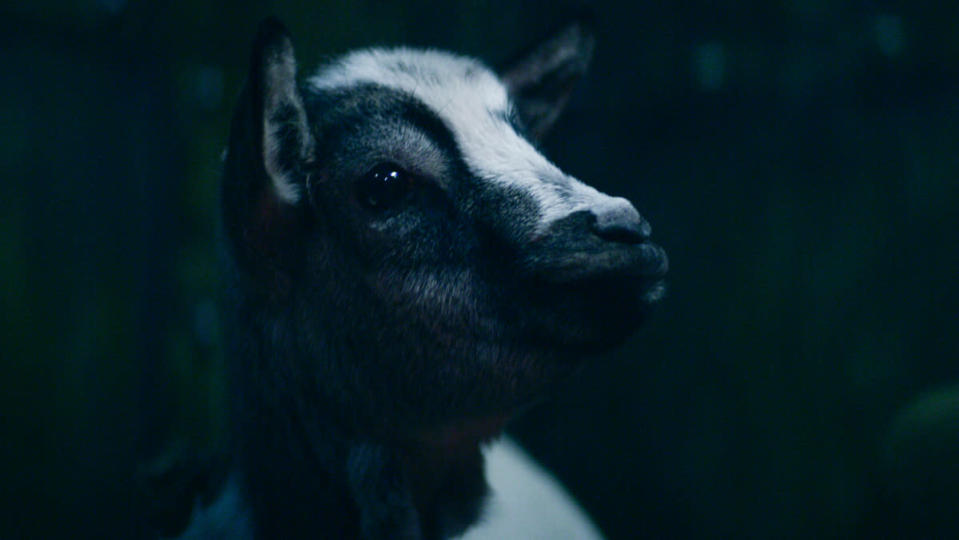 Milo the goat in Shadow and Bone