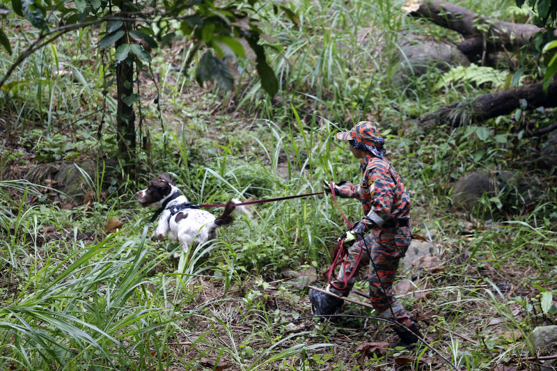 A member of a rescue team uses a sniffer dog to conduct a search and rescue operation for a missing British girl Nora Anne Quoirin, at a forest in Seremban, Negeri Sembilan, Malaysia, Saturday, Aug. 10, 2019. The parents of the 15-year-old London girl who disappeared from a Malaysian resort a week ago say she isn't independent and has difficulty walking, in new details to support their conviction that she was abducted. (AP Photo/Lai Seng Sin)